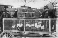 záchrana koroptví 1928