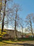 Stromy svobody vysadili naši předci i v Hlízově